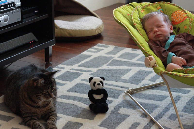 Meeting of the minds. Hazel, Mr. Panda and Luca