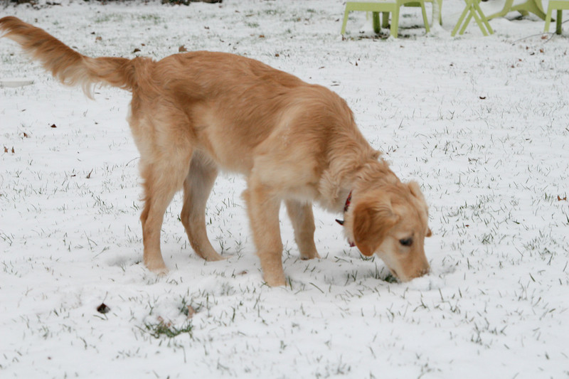 Lucy First Snow Web-4