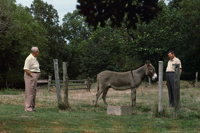 Noval Cantrel, Clifford England, and his mule - in Myrtle, Missouri.