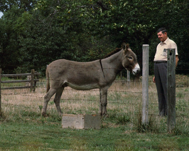 Clifford England, and his mule - in Myrtle, Missouri.