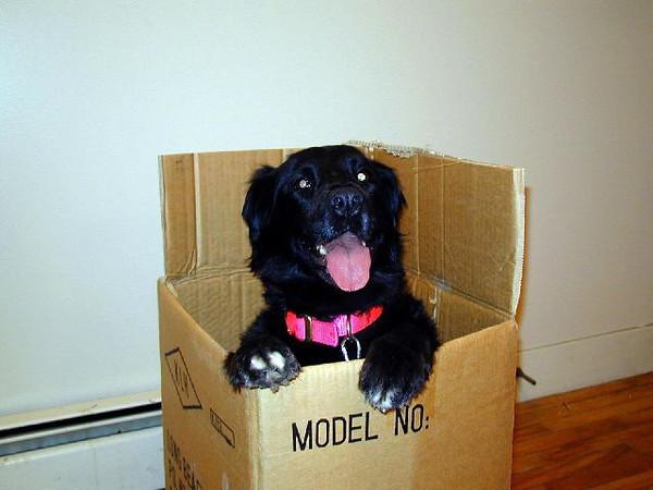 Molly in a box.