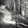 Play of light and dappled shadows under the redwood trees at the Mystery Spot (Santa Cruz Mtns)