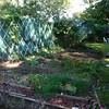 Last look at the vegetable garden.