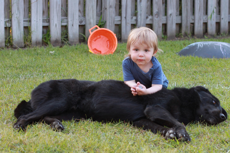 Luca loved playing with Coho.
