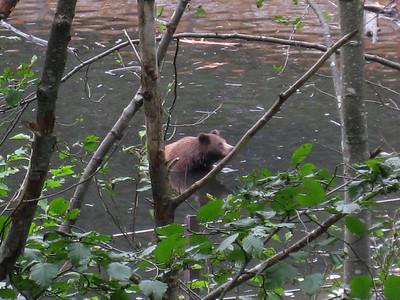 Bear at sanctuary