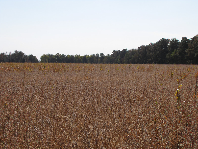 We rousted a pheasant in this field, our first sighting and the only one for days. The rains this winter must have destroyed many of the nests.<br /> October 11, 2010