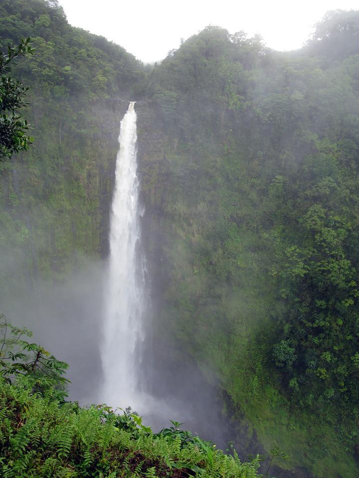 Akaka Falls State Park <br /> February 8, 2008