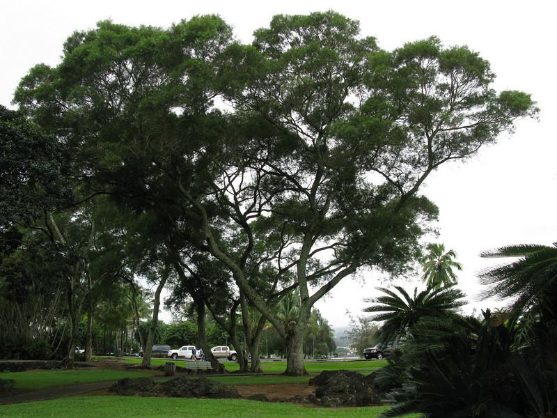 Lili'uokalari Gardens - February 6, 2008
