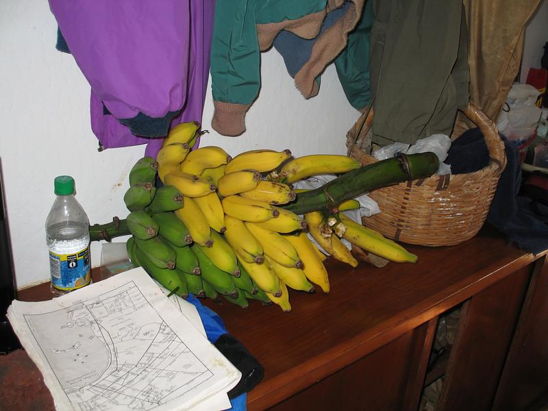 Now those are FRESH bananas!