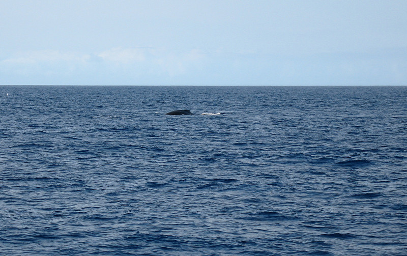 What an incredible blessing. We got to see whales!