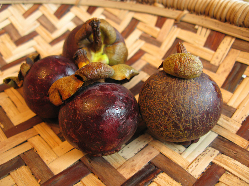 Mangosteen – Queen of the fruit<br /> February 3, 2008