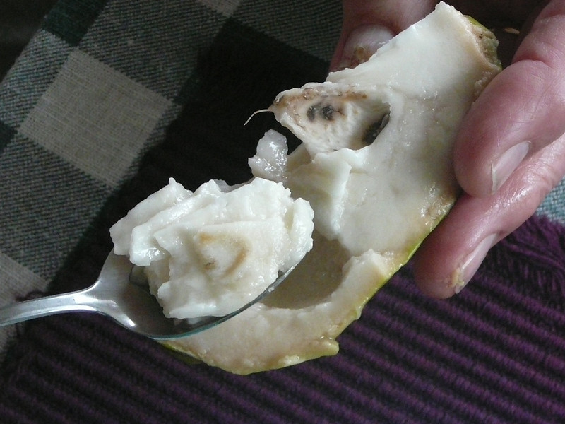 Atemoya - Delicious!