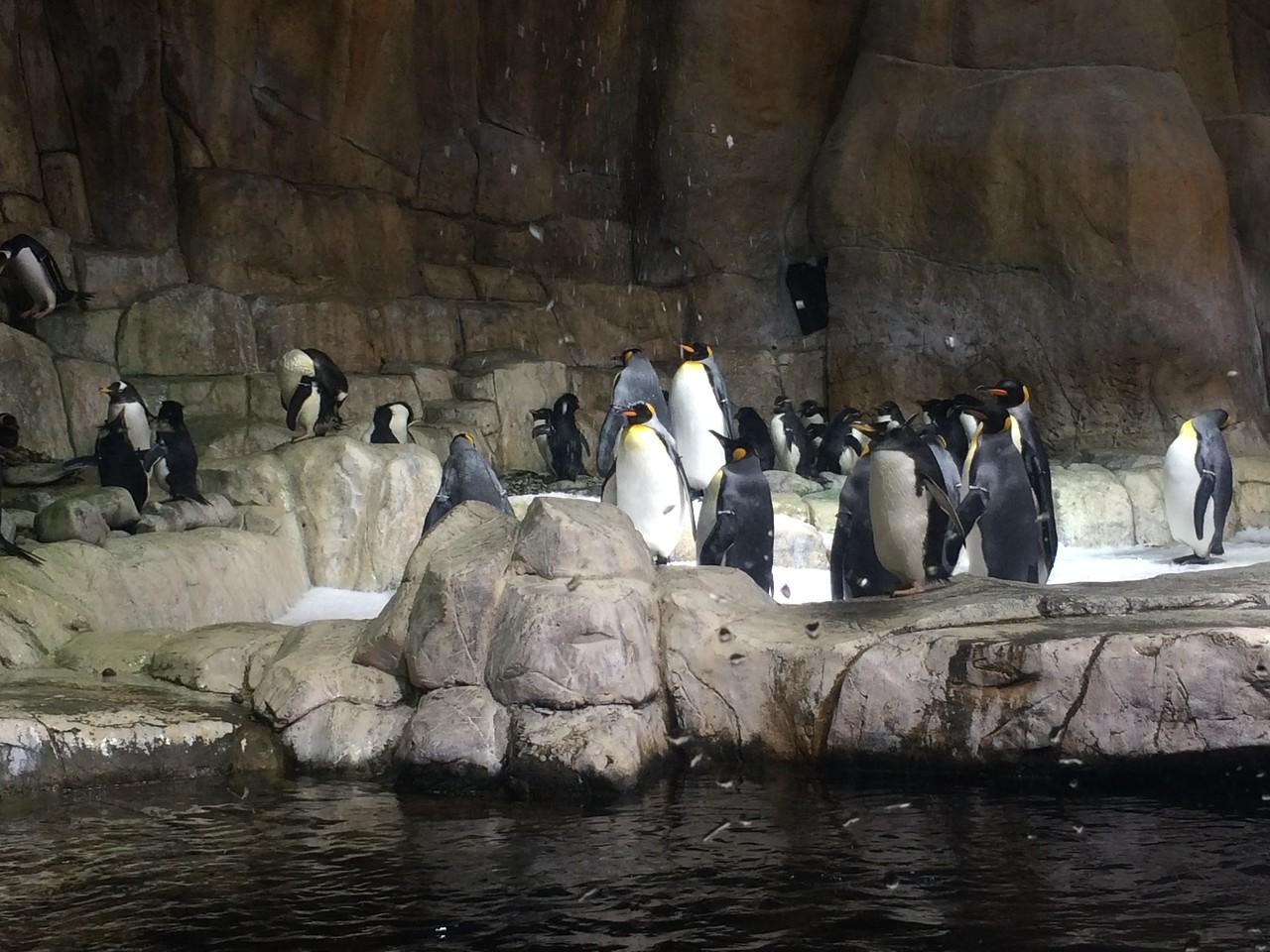 Henry Doorly Zoo - Omaha