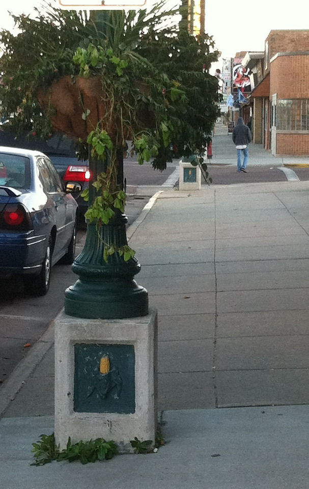 Even the lampposts are decorated with corn.