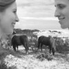 assateague horses_B&C_B&W