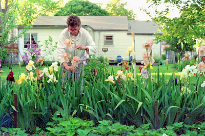Rita cuts some iris flowers in her back yard on Stanford Street, Springfield, MO. About 1990.