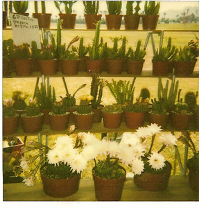 Markets, Nurseries and Cactus