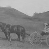 Horses and Wagon - Lettie and Olivia