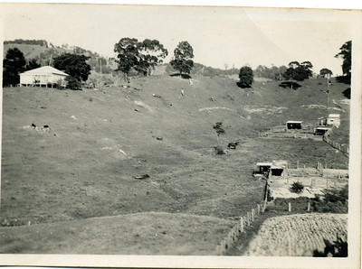 Grandma's farm at Crabbes Creek, northern New South Wales. Inscription on back says 'View of the ranch.  Can you see Blossom'.  Photo from my grandmother's collection - May McGilvery (nee Munro)