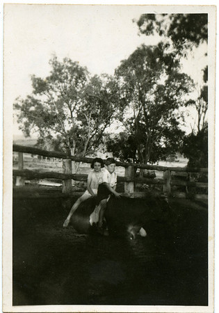 Betty and Peter English  Nell has written on the back - 'This old cow doesn't care what the two kids do to her.  Peter looks as if the old cow has sharp bones.'  Photo from my grandmother's collection - May McGilvery (nee Munro)