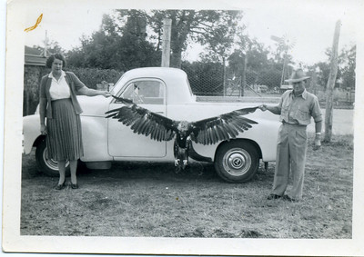 Nell & Charlie Curd holding an eagle by it's wing tips.  Nell has written on the back of the photo - 'This is an eagle that Stan Curd poisoned on his place.  Chas & I held it along the side of our car to give you an idea of the size of it.'  Photo from my grandmother's collection - May McGilvery (nee Munro)