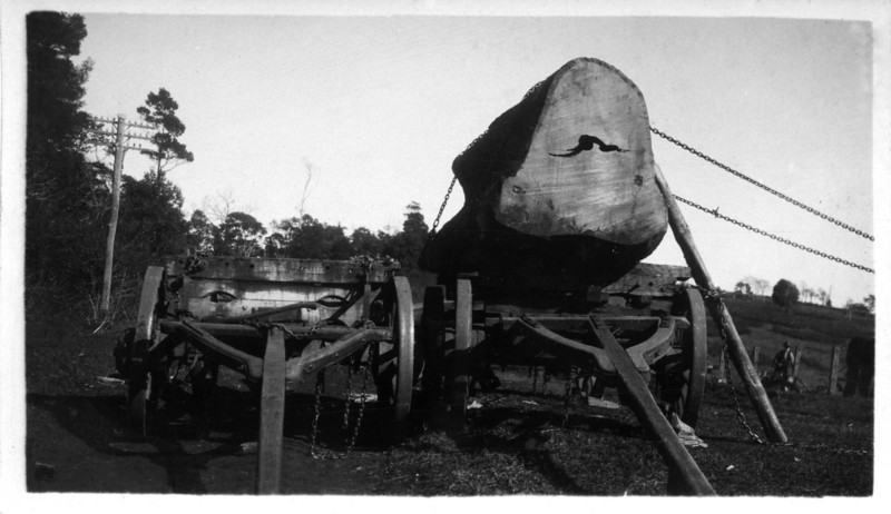 A photograph from Wally Munro's photo collection - I imagine it is his timber hauling wagon. <br /> Stamped on back SN Collard - Maleny<br /> <br /> Photo from Wally Munro Collection - May McGilvery (nee Munro).