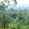 Bwindi Community Walk October 2018-18