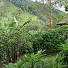 Africa, Uganda Bwindi Mahogany Springs November 2018-12