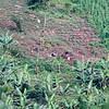 Africa, Uganda Bwindi Mahogany Springs November 2018-15