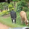 Africa, Drive from Bwindi to Rwanda-7