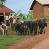 Africa, Drive from Bwindi to Rwanda-6