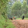 Africa, Drive from Bwindi to Rwanda-8