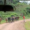 Africa, Drive from Bwindi to Rwanda-11