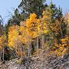 Fall Camping Nevada Sept  2020-10
