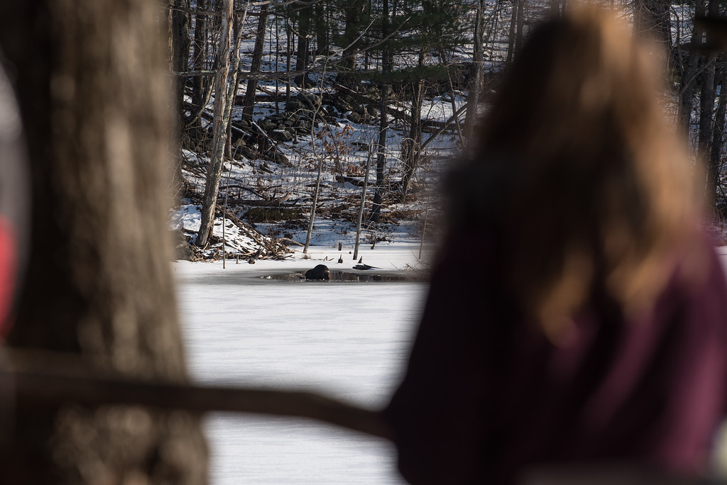 . (01/21/18 PRINCETON MA) A young girl observes a beaver off in the distance during a nature walk on Sunday at the Wachusett Meadow Wildlife Sanctuary in Princeton.  SENTINEL & ENTERPRISE JEFF PORTER