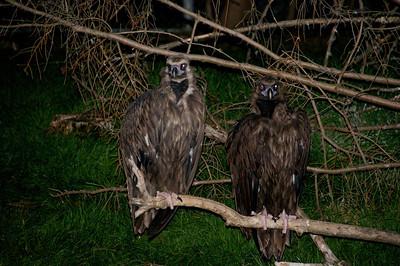 Zoo Boo  2010-10-16  44