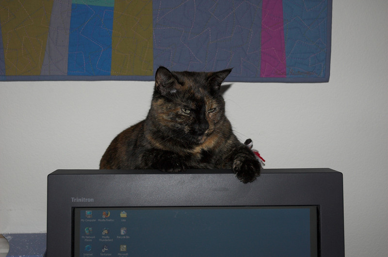Abby likes to sit on top of my monitor, cause it's warm.