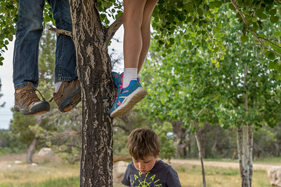 A young boy is completely indifferent as two pairs of legs dangle above him from the limbs of the tree he is sitting under.