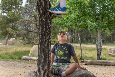 A young boy sitting on a rock next to a tree looks up at a pair of legs hanging out of the tree limbs above him.