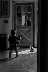 A toddler and his kitten playing in a sunlit room.