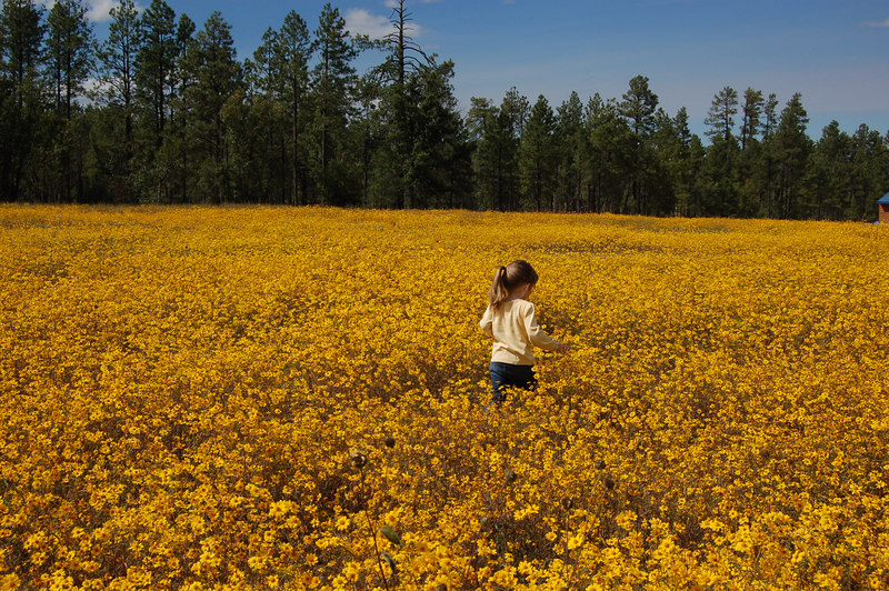 There were fields of these wildflowers all around Pinetop this weekend.