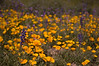 The wildflowers were absolutely stunning thanks to the heavy winter rains.