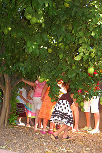 Looking for the yellow clue in the lemon tree.