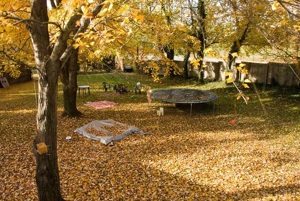 Nov 2007 Fall Frolicking