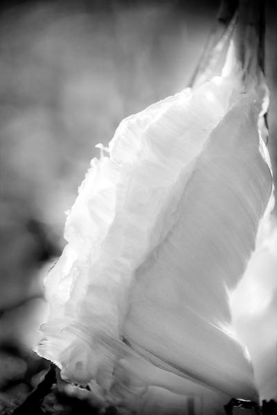 Frozen Wedding Dress