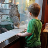 Lindsay Wildlife Museum <br /> Walnut Creek, CA <br /> May 19, 2016