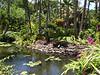 Maui - Hotel Property-Lagoon