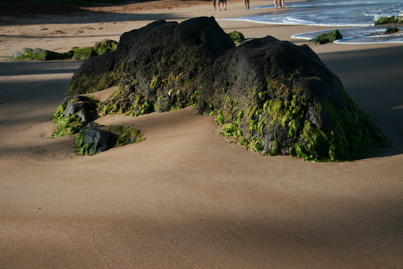 Exploring the coast line in the morning (14)