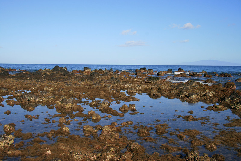 Exploring the coast line in the morning (5)