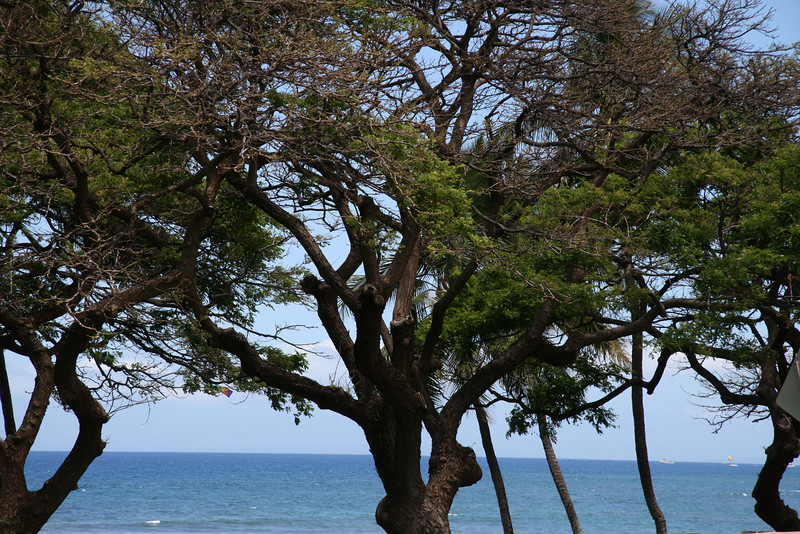 Lahaina Outing (5)